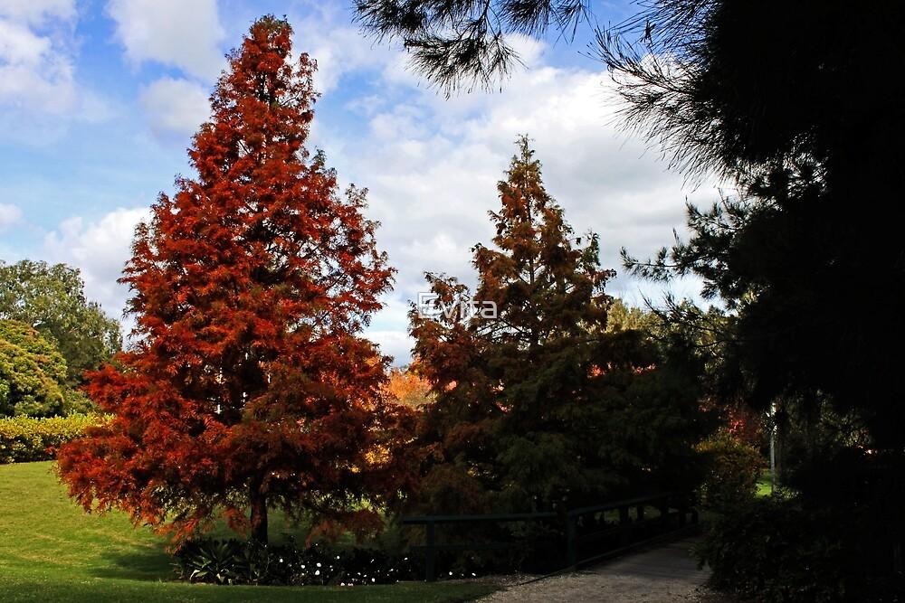 Autumn In Picton by Evita