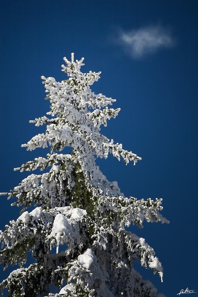 Frozen by redtree