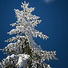 Frozen by redtree