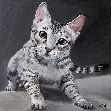 Ocicat Kitten by Hiki