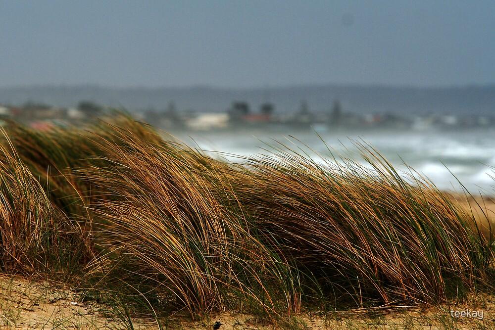 Wind Swept by teekay