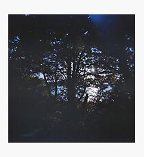 Puget Forest  Photographic Print