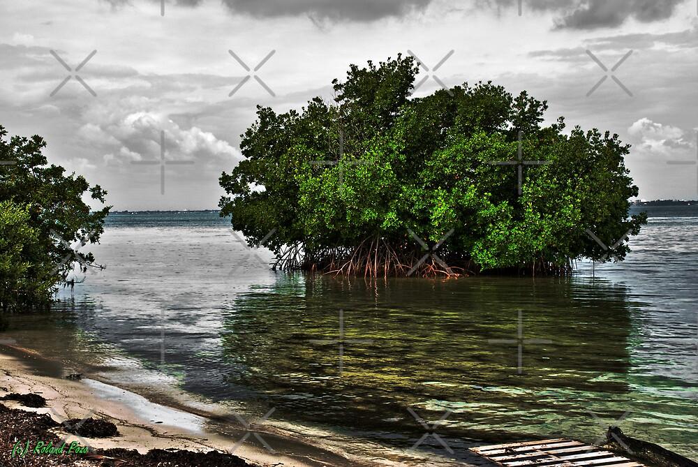 Shipwreck by photorolandi