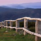 1075 High country fence - Mt Strirling by Hans Kawitzki
