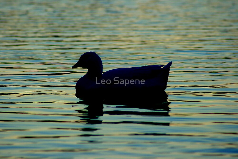 Duck silhouette on blue water. by Leo Sapene