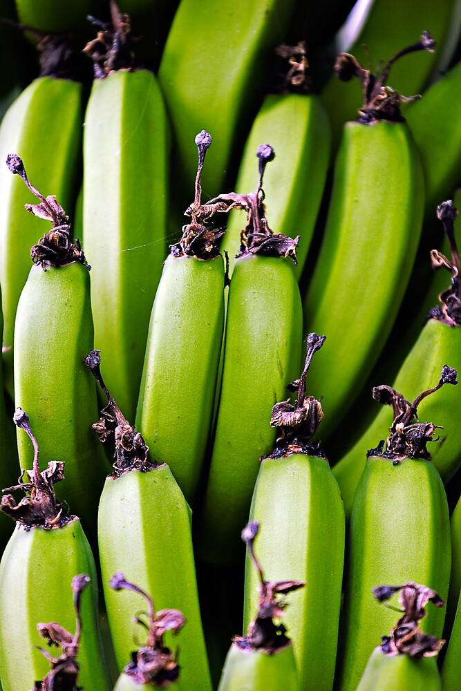 Green Bananas by Matt Koenig