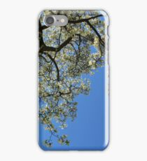 Blossoming white magnolia tree against blue sky in spring iPhone Case/Skin