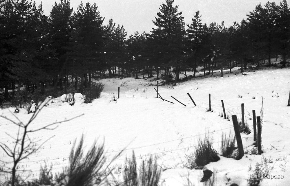 Nevou a noite passada by Luis Raposo