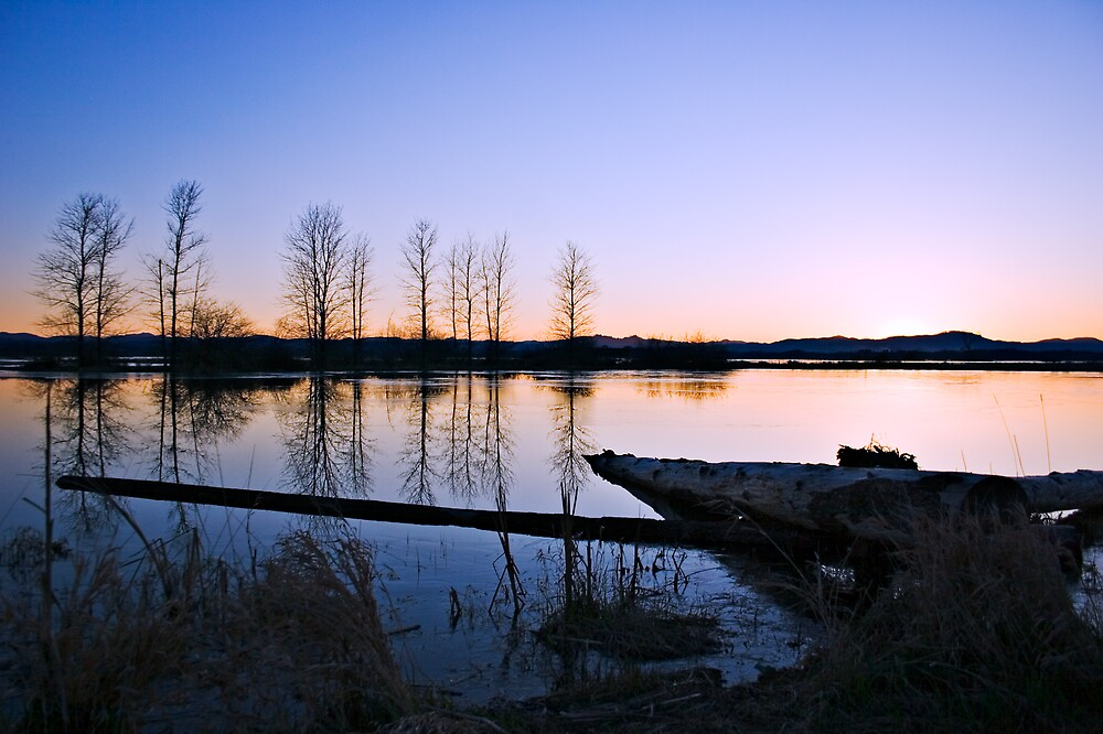 Twilight by Matt Koenig
