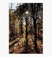 Mount Royal, Montreal - 2 Photographic Print