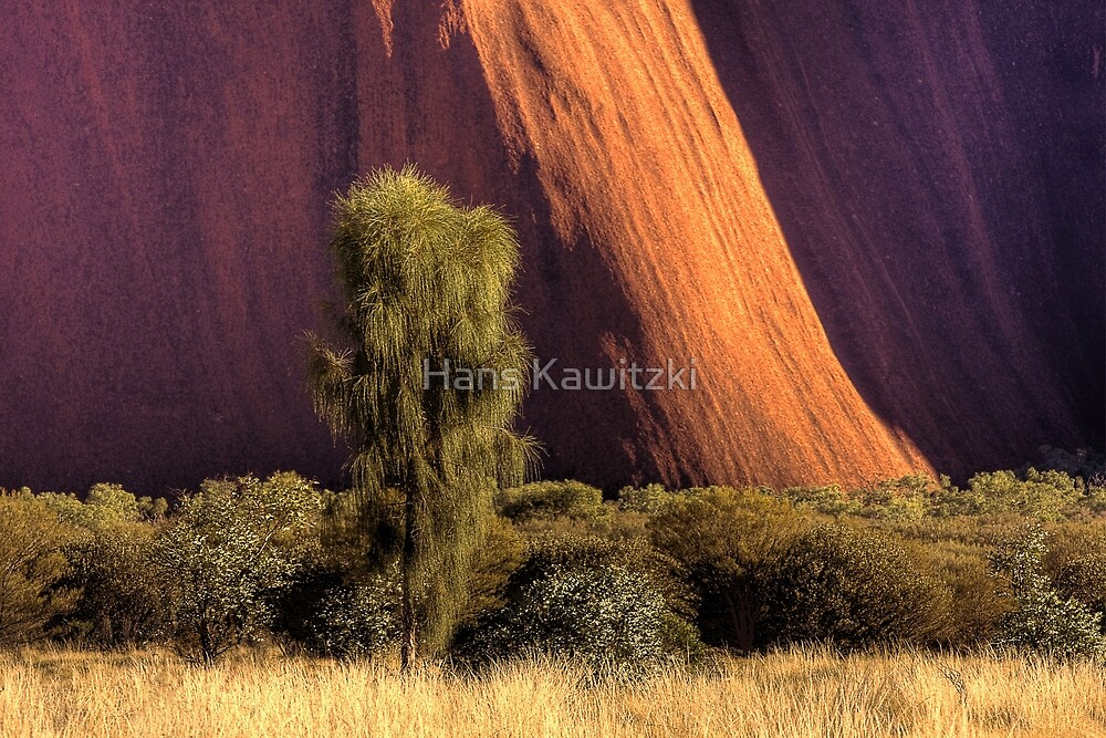 1132 Tree and Rockface - Uluru by Hans Kawitzki