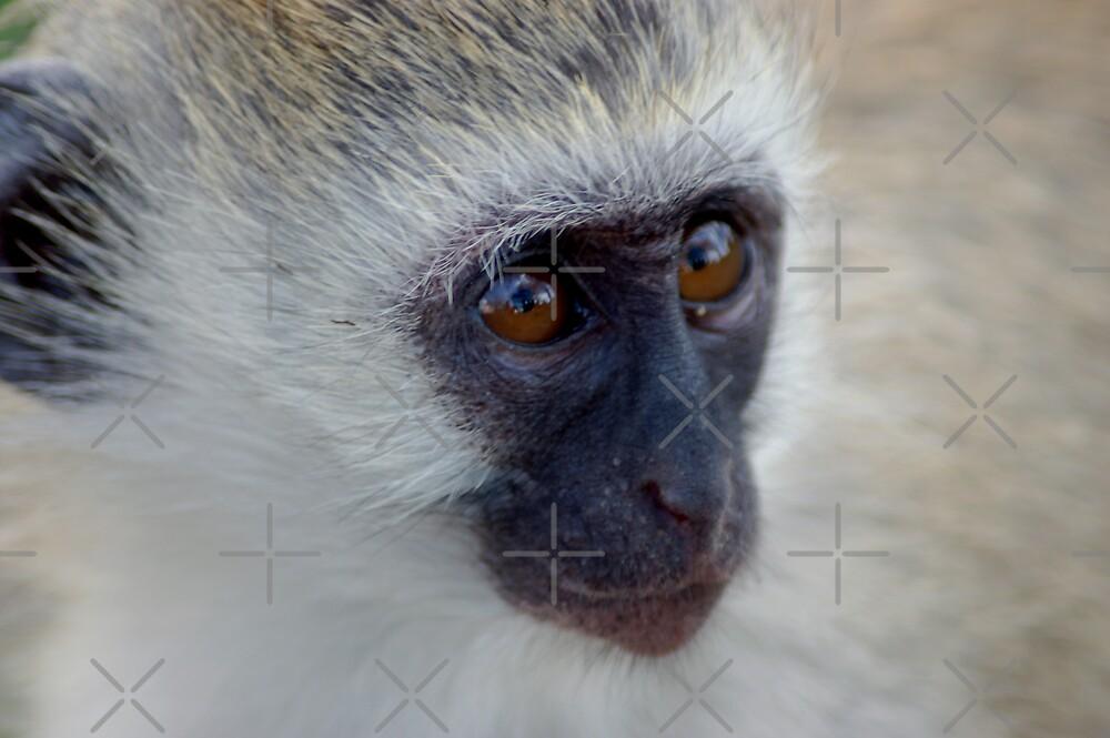 Little Monkey by ApeArt