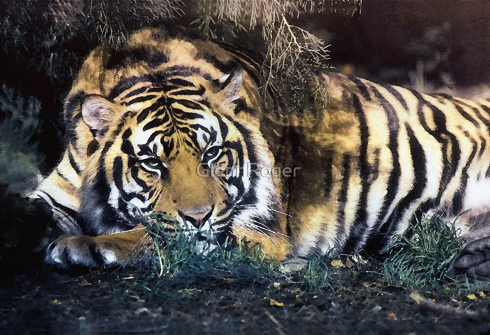 Big Cat by GlennRoger