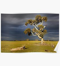 1147 Twisted Tree Poster