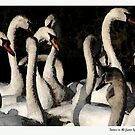 Swans in the Frame  by John M Keogh