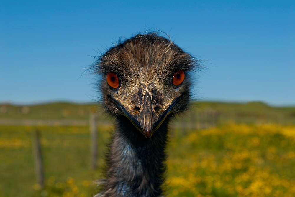 Emu Looking at Me by Gerard  Horan
