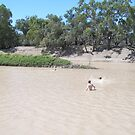 Boys swimming in the Darling River by DaveWatto
