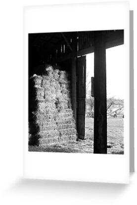 Piled High by Rebecca Ogden