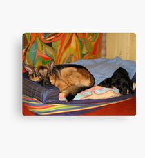 DOGS LIVING TOGETHER Canvas Print