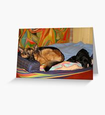 DOGS LIVING TOGETHER Greeting Card