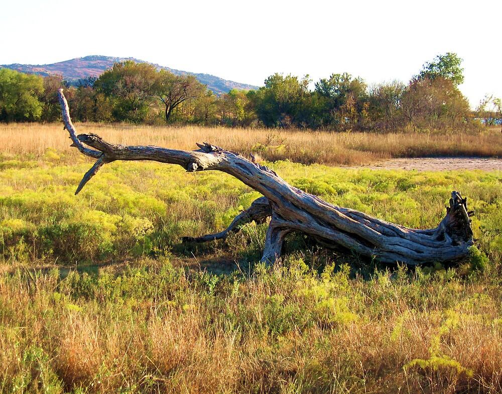 Fallen Branch by Todd Ward