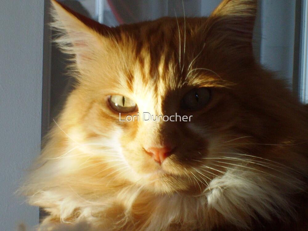 Sunlit Kitty Kat by Lori Durocher