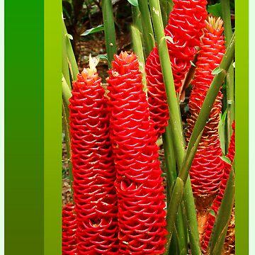 Beehive series - red  by PeaceM