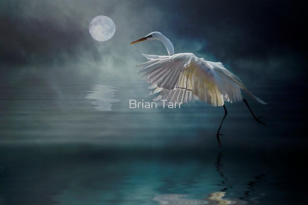 Moonlight Rhapsody by Brian Tarr