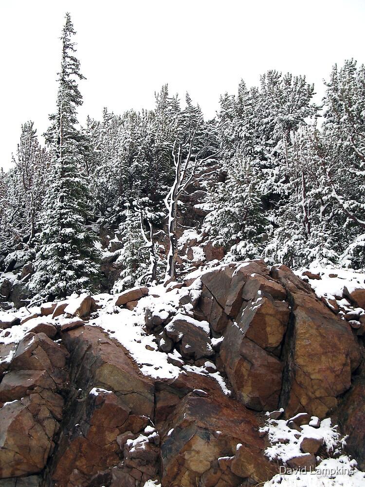Fresh Montana Snow 2 by David Lampkins