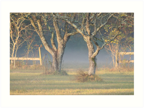 Winter Day in Pearland Texas by declown