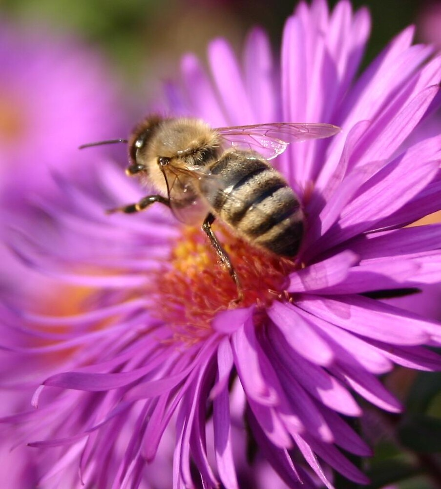 Honey Bee Working by declown