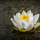 Queen of the Pond by vivsworld