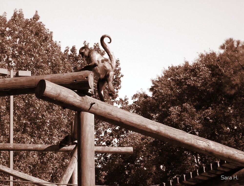 monkey by Sara H.