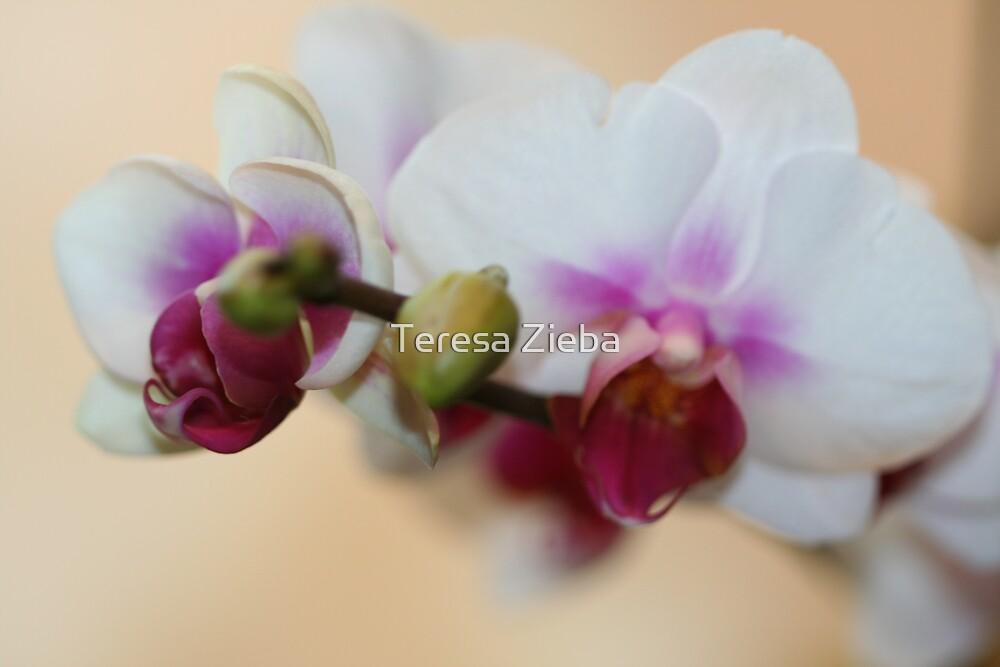 Painted Orchid by Teresa Zieba