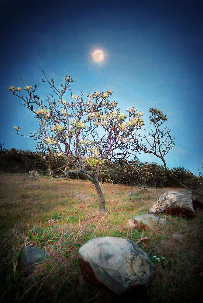 Moon Tree by Ben Ryan