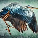 Great Blue Heron by Brian Tarr