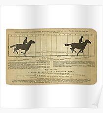 Eadweard Muybridge – 1830-1904 – Animal Locomotion Theory – Horse Poster - White Poster