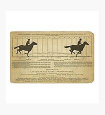 Eadweard Muybridge – 1830-1904 – Animal Locomotion Theory – Horse Poster - White Photographic Print