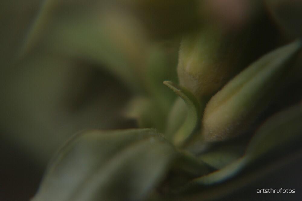 Leafy by artsthrufotos