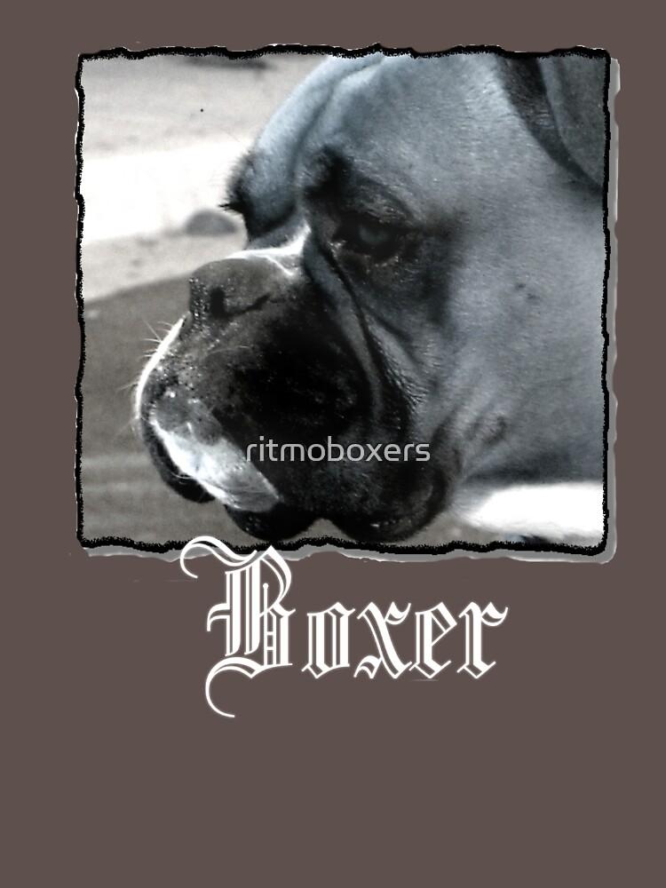 Boxer headshot by ritmoboxers