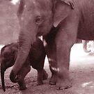 Elephant by vamified