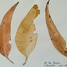 Eucalyptus leaves by Colombe  Cambourne