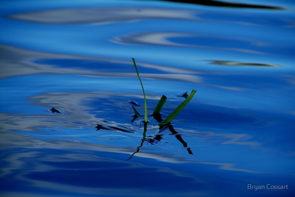 A little bit of green in the blue by Bryan Cossart