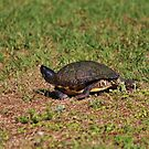 Jogging Turtle Style by Cynthia48
