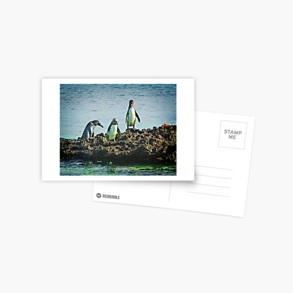 Galapagos Penguins Postcard