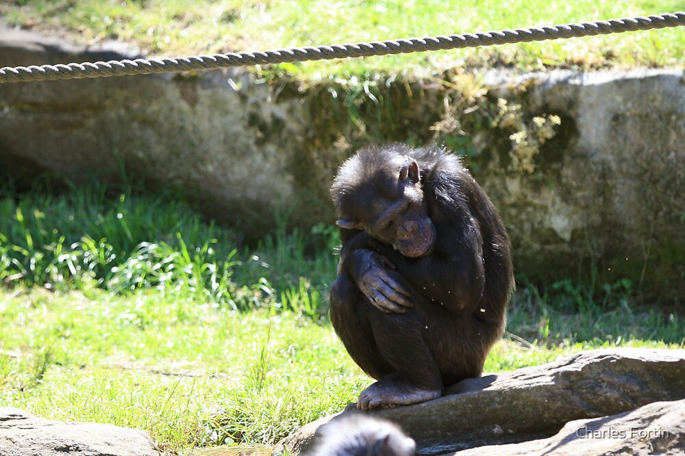 Lonely Monkey by Charles Fortin