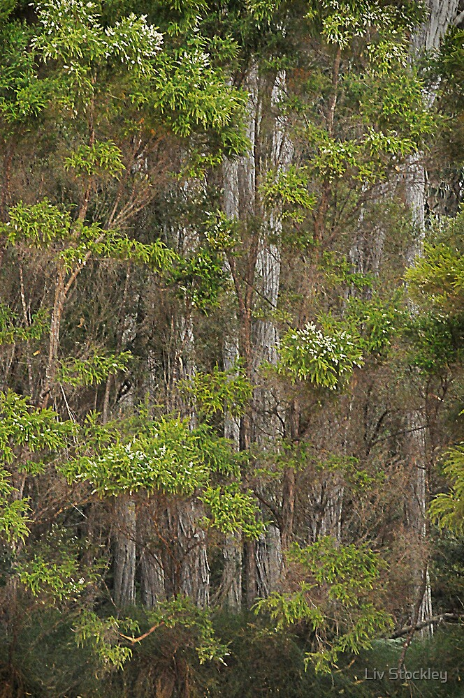 Tall trees by Liv Stockley