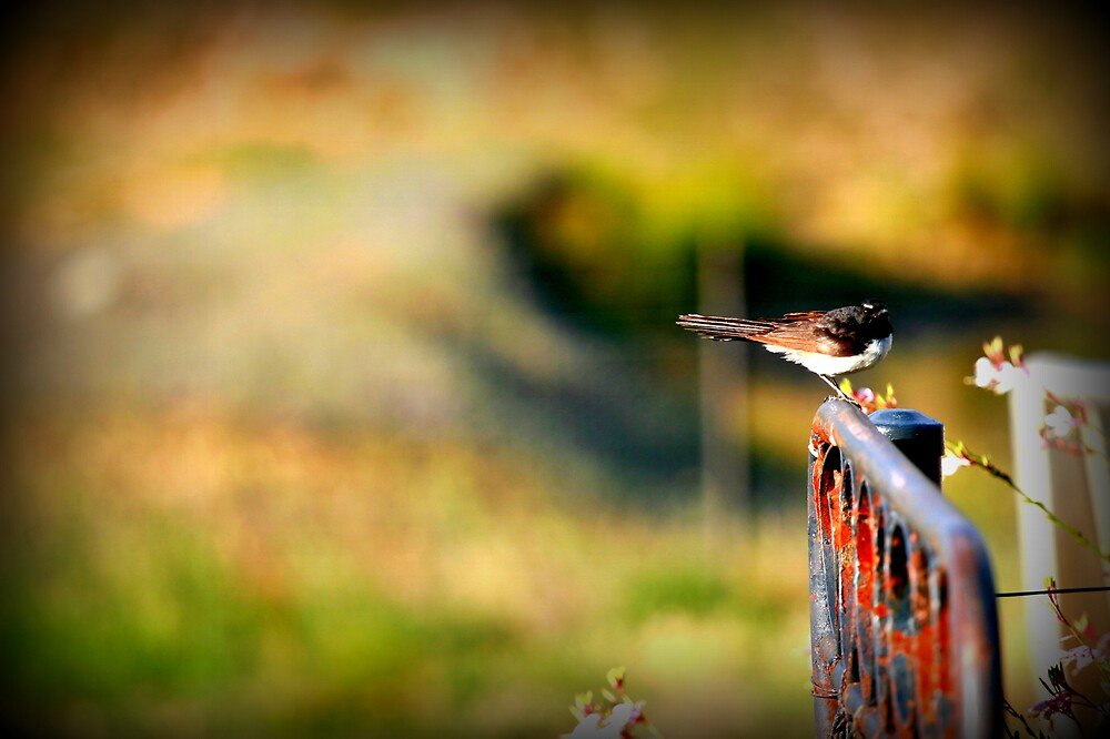 Bird on a Gate by Shmacky