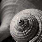 Spirals by Janine  Hewlett