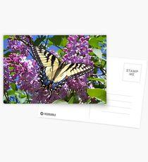 Lilac Butterfly, Postcard Postcards